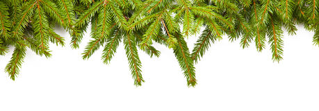 Fir branches Stock Photo