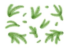Fir branches. Christmas tree, pine needles isolated on white background. Vector illustration Royalty Free Stock Photo