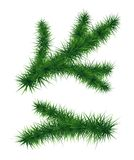 Fir branches. Christmas tree. Set of fir branches. Christmas tree. Vector illustration isolated on white background. Symbol of  New Year Stock Photos