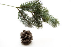 Fir branches with cone. Fir branch to Christmas decoration stock photography