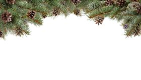 Fir branches with cones, isolated on white background. Copyspace for text Stock Images
