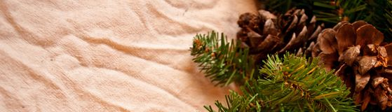 Fir branches and cones Royalty Free Stock Photography