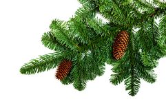 Fir branches with cones on white background Stock Images
