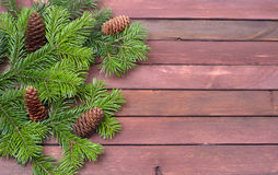 Fir branches Stock Photos