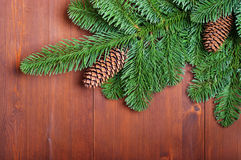 Fir branches with cones Royalty Free Stock Photography