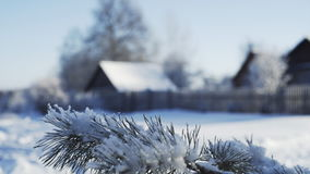 Fir branches. Countryside landscape motion through fir branches ,wooden country house at background in defocus stock video