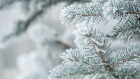 Fir branches covered with hoar frost shoot in RAW,. Fir branches covered with hoar frost shoot in RAW pan stock footage