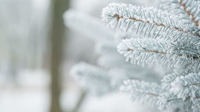 Fir branches covered with hoar frost shoot in RAW,. Fir branches covered with hoar frost shoot in RAW pan stock video footage