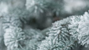 Fir branches covered with hoar frost shoot in RAW,. Fir branches covered with hoar frost shoot in RAW pan stock video