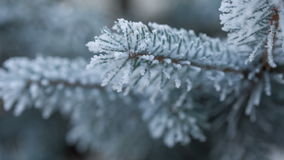 Fir branches covered with hoar frost shoot in RAW, slide. Movement stock footage
