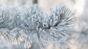 Fir branches covered with hoar frost shoot in RAW, slide. Movement stock video footage