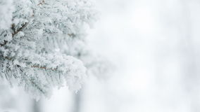 Fir branches covered with hoar frost shoot in RAW,. Fir branches covered with hoar frost shoot in RAW still stock video