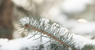 Fir branches covered with snow in the morning closeup with shallow focus. 4k photo stock photos