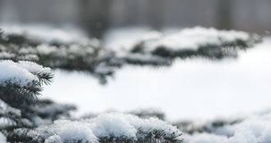 Fir branches covered with snow in the morning with snow falling on background Stock Photography