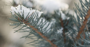 Fir branches covered with snow in the morning with snow falling on background Stock Images