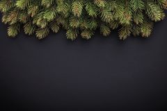 Fir branches on dark background Royalty Free Stock Image