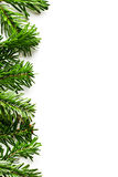 Fir branches frame Stock Images