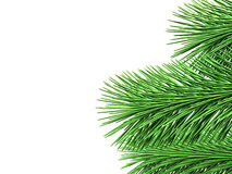 Fir branches with green needles on white background 3d illustra Stock Photography