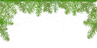 Fir branches half frame under snow. Illustration with fir branches  on white background Stock Photos