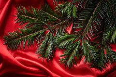 Fir branches Stock Images