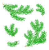 Fir branches . Vector. Fir branches. Set of Christmas tree branches. Symbol of Christmas and New Year. Isolated. Vector vector illustration