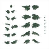 Fir branches set. Set of coniferous fir branches Stock Photography