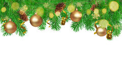 Fir branches in white background. Royalty Free Stock Images