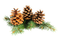 Free Fir Branches With Cones Royalty Free Stock Images - 27146299