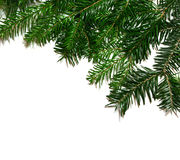Fir branchlets Royalty Free Stock Photography