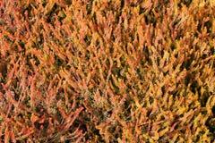 Fir bush. Seamless background with orange decorative fir bush Stock Photos
