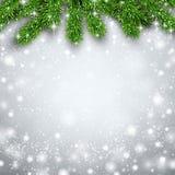 Fir christmas background. Detailed background with fir. Christmas design. Vector illustration Stock Photos
