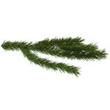 Fir closeup, 3d illustration. Isolated on white background Stock Photo