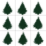 Fir collection. The collection of spruce from different angles Royalty Free Stock Photo