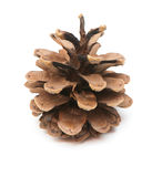 Fir-cone Royalty Free Stock Photos