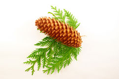 Fir-cone Stock Photos