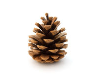 Fir cone Royalty Free Stock Photos