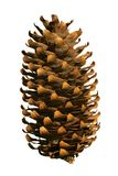Fir cone. An isolated  on a white background Stock Photo