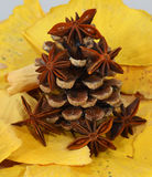 Fir cone and anise Royalty Free Stock Photos