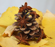 Fir cone and anise Royalty Free Stock Image
