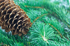 Fir cone and branch Stock Images