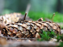Fir cone Stock Photos