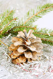 Fir cone covered Royalty Free Stock Photo