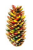Fir cone decorated for hanging in Christmas tree Stock Photos