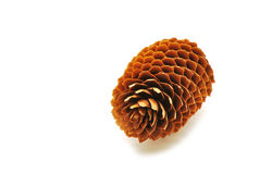Fir cone Royalty Free Stock Photography