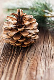 Fir cone an green fir. With copy space Royalty Free Stock Photography