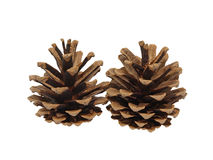 Fir cone.Isolated. Royalty Free Stock Image