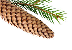 Fir cone Stock Photography