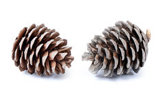 Fir cone isolated on white background Royalty Free Stock Image