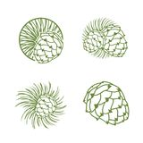 Fir Cone Logo Set. Illustration of Fir Cone Logo Design Collection Royalty Free Stock Image