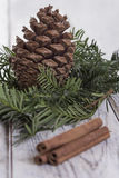 Fir Cone and needle branch Royalty Free Stock Images